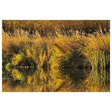 Reflection Grasses by Grandmaison, 24