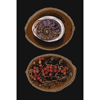 Coquille d'ammonite fossilisée par Klein, toile, 24 x 36 po