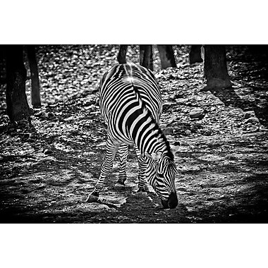 Zebra by Polk II, Canvas, 24
