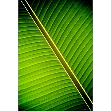Tropical Shade by Nelson, Canvas, 24
