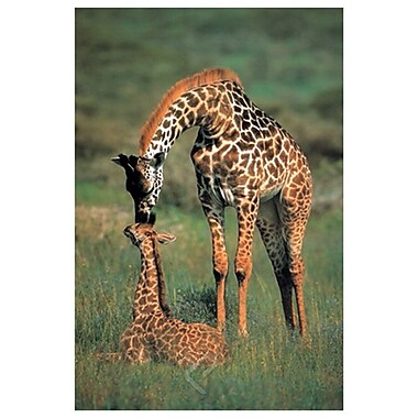 Giraffe Mother & Baby, Stretched Canvas, 24