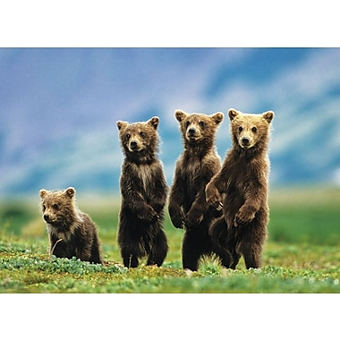 Bear Cubs Standing Puzzle, 1000 Pieces
