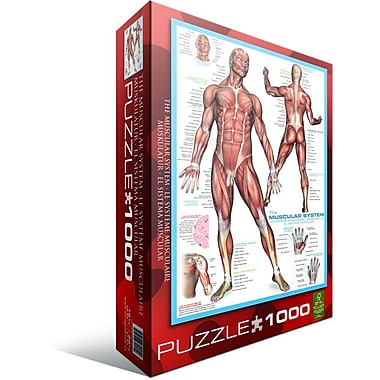Muscular System Puzzle, 1000 Pieces