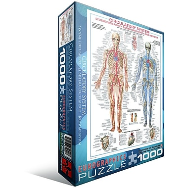 Circulatory System Puzzle, 1000 Pieces