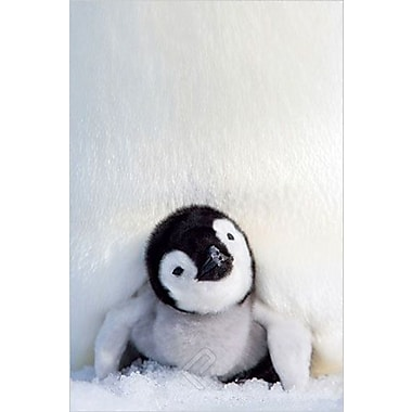 Penguin Chick Poster, 24