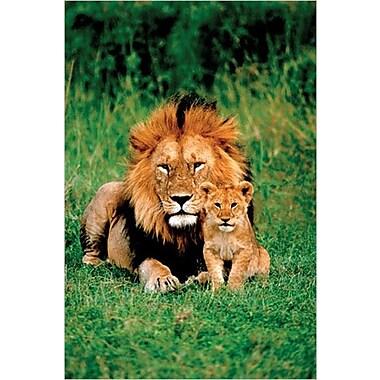 Lion et son bébé, affiche, 24 x 36 po