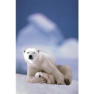 Polar Bear and Baby Poster, 24