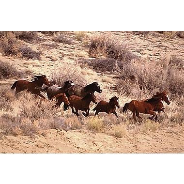 Mustang Horses Running,Wyoming Poster, 24