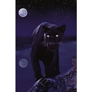 Black Panther in Moonlight Poster, 24