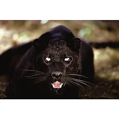 Black Panther Close- Up Poster, 24