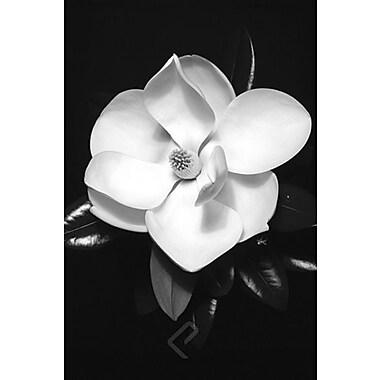 Magnolia Poster, 24