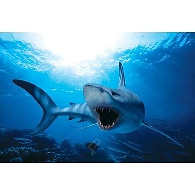 Requin, affiche, 36 x 24 po