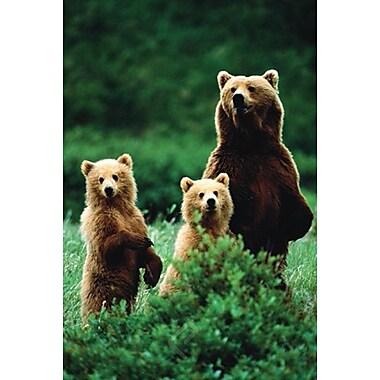 Three Bears Poster, 36