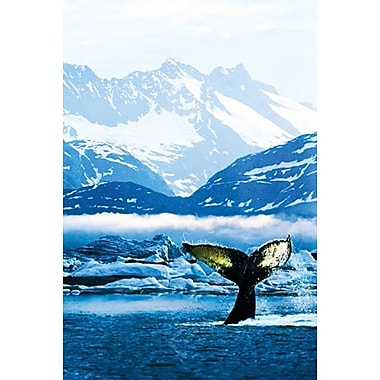 Humpback Whale Poster, 24