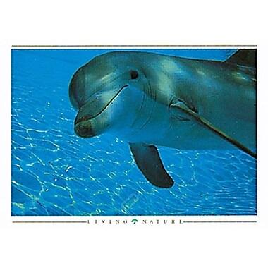 Dolphin Curiosity Poster, 36