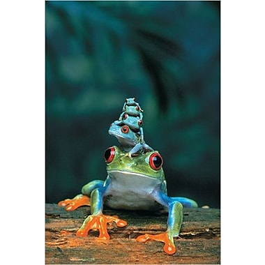 Red Eyed Tree Frog Poster I, 36