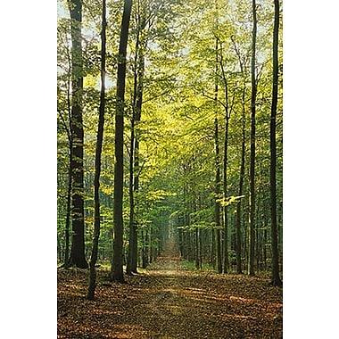 Sentier en forêt, affiche, 24 x 36 po