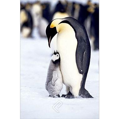 Penguins Maternal Moment Poster, 36