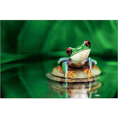Red Eyed Tree Frog Poster II, 36