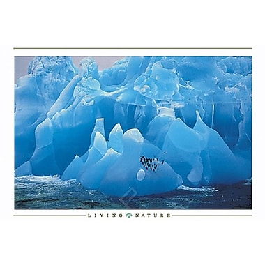 Penguins on Iceberg Poster, 36