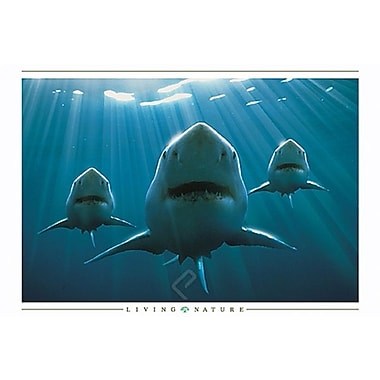 Sharks Squadron Poster, 24