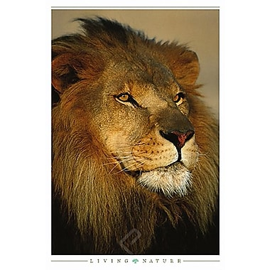 African Lion Poster, 24
