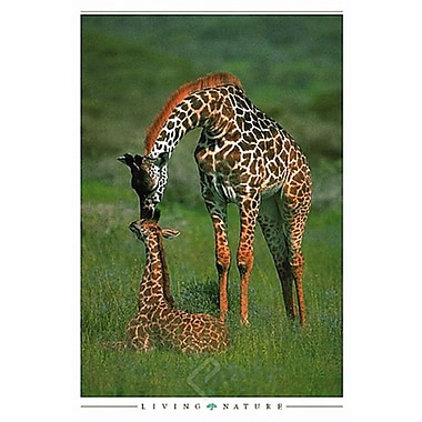 Giraffe Mother and Baby Poster, 24