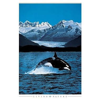 Orca Poster, 24
