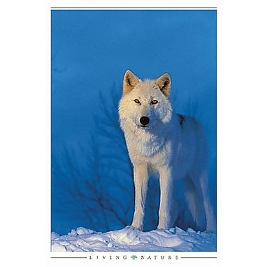 White Wolf Poster, 24