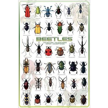 Beetles Poster, 24