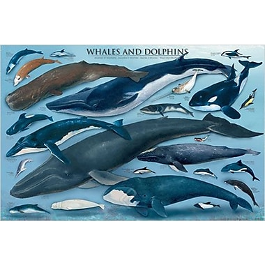 Whales and Dolphins Poster, 24