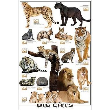 Big Cats Poster, 24
