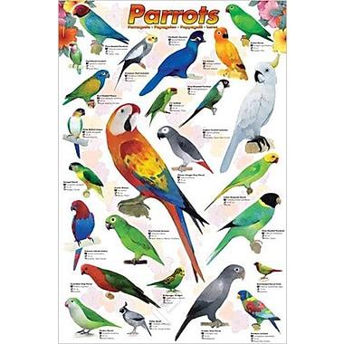 Parrots Poster, 24