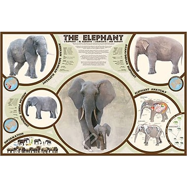 The Elephant Poster, 24