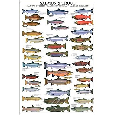 Salmon and Trout Poster, 36