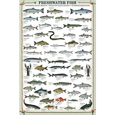 Freshwater Fish Poster, 24