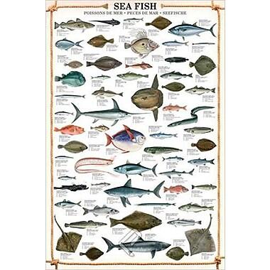 Sea Fish Poster, 24