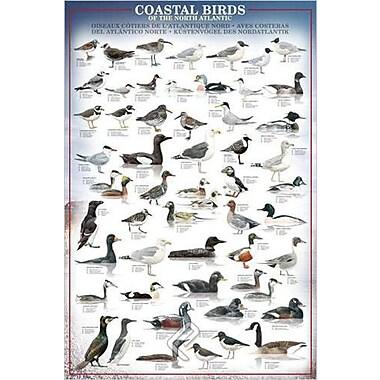 Coastal Birds Poster, 24