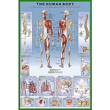 The Human Body Poster, 36