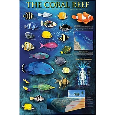 The Coral Reef Poster, 26 3/4