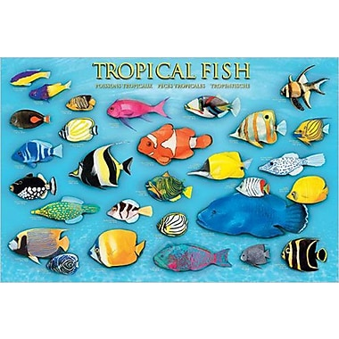 Tropical Fish Poster, 24
