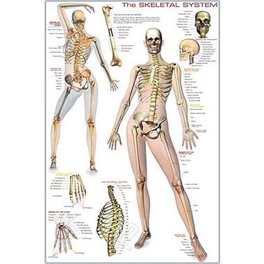 Skeletal System Poster, 24