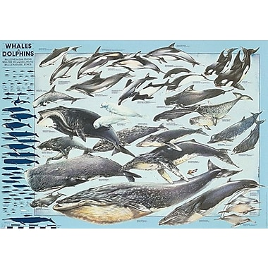 Whales & Dolphins Poster, 26.75