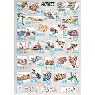 Snakes Poster, 26 3/4