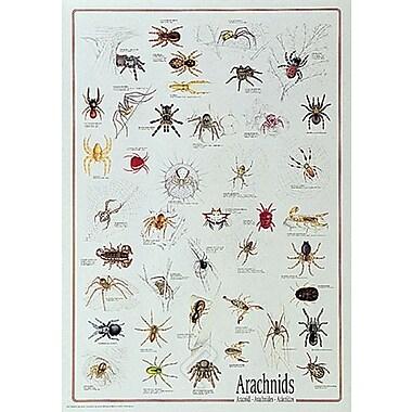Arachnids Poster, 26-3/4