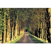 Ace Framing Row of Trees Path 3D Poster, Mini