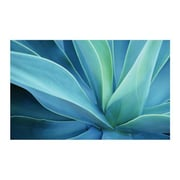 "Ace Framing ""Agave Cactus"" Framed Poster, 24"" x 36"""