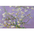 Ace Framing in.Almond Blossom Lavenderin. Framed Poster, 24in. x 36in.