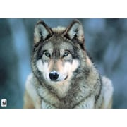 "Pyramid America™ ""Grey Wolf"" Poster"