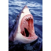 Ace Framing Great White Shark Framed Poster, 36 x 24